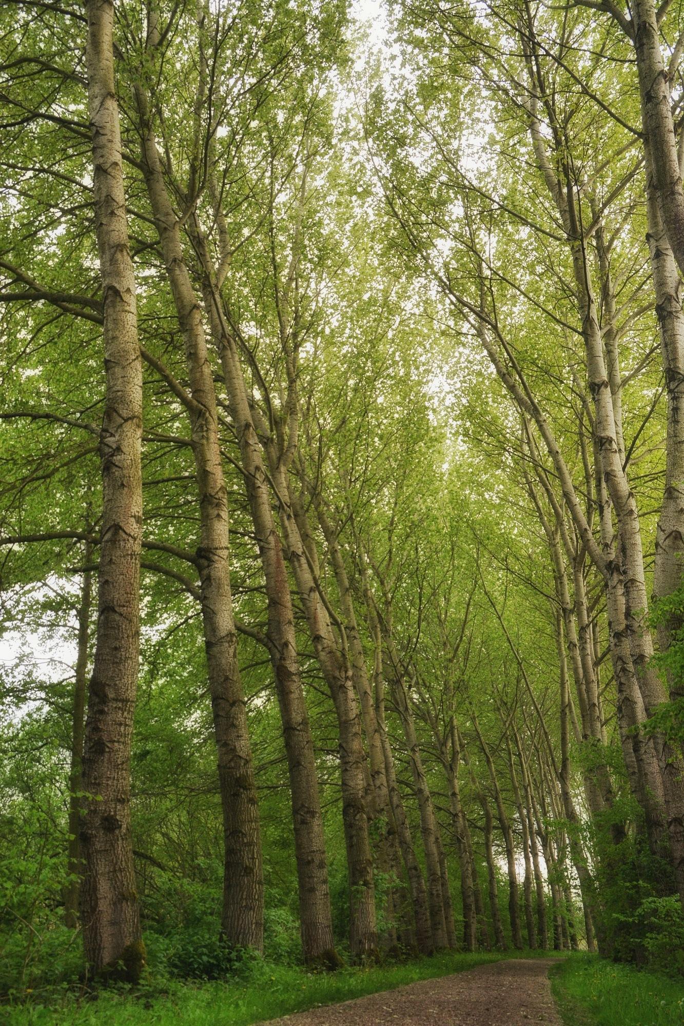 Dancing trees by Jannie Looge