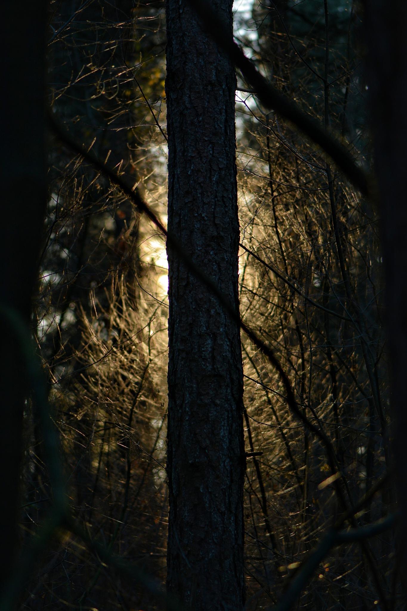 Hidden by Jannie Looge