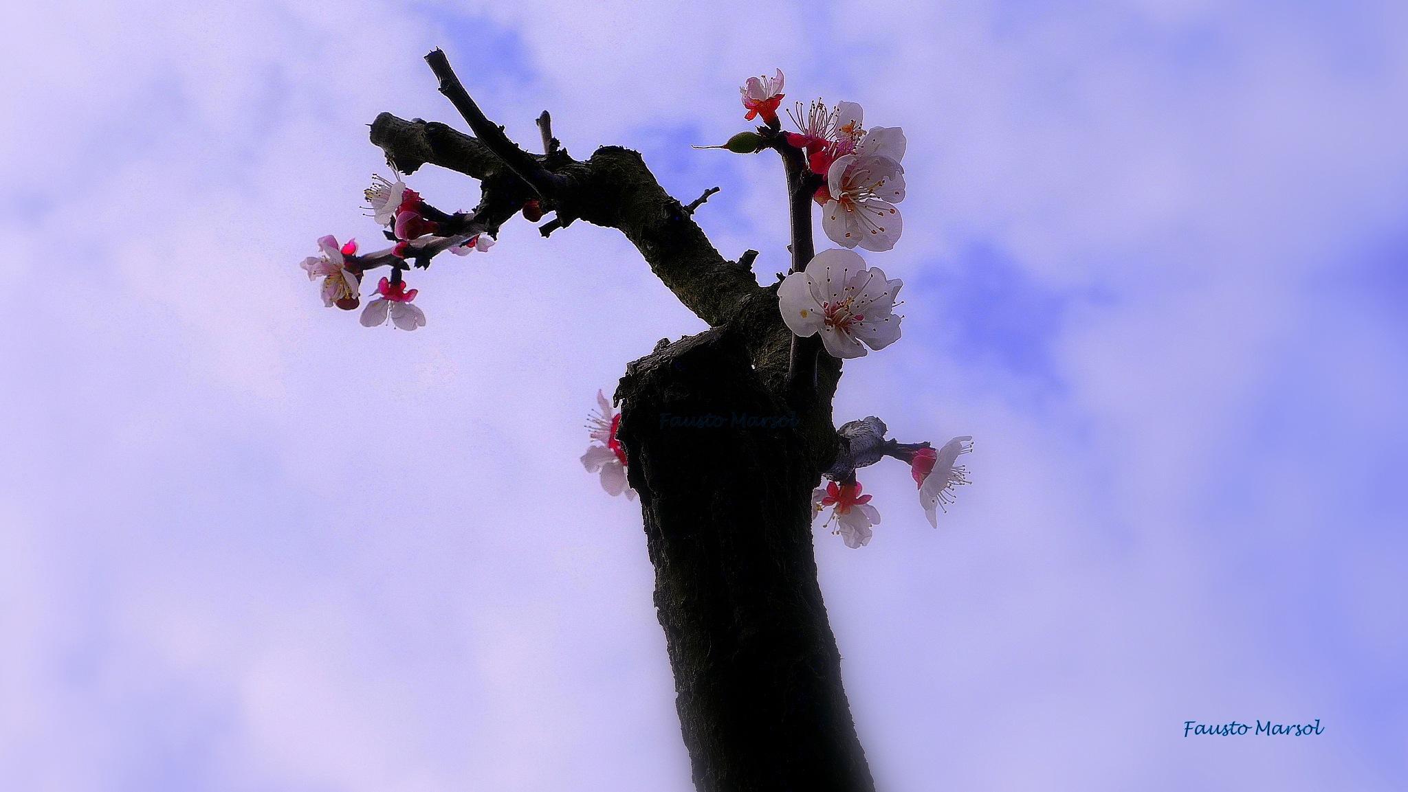 Saudação de Primavera // Saludo de primavera // Spring Salutation. © Fausto Marsol by Fausto Marsol