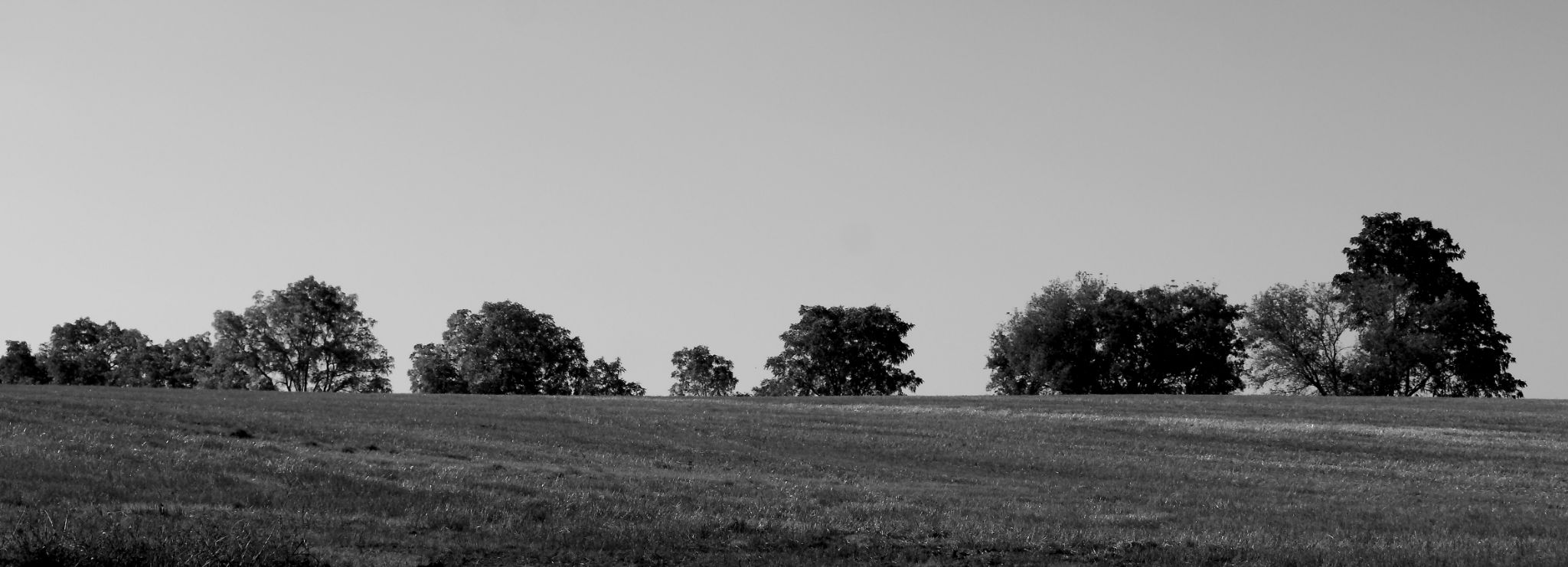 Field of Trees by JaniceArnottPhotography