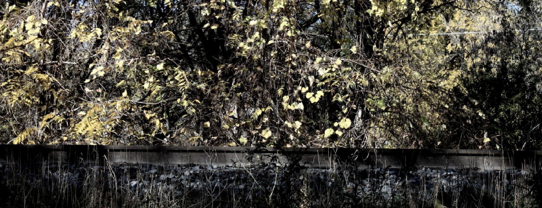 Track by JaniceArnottPhotography