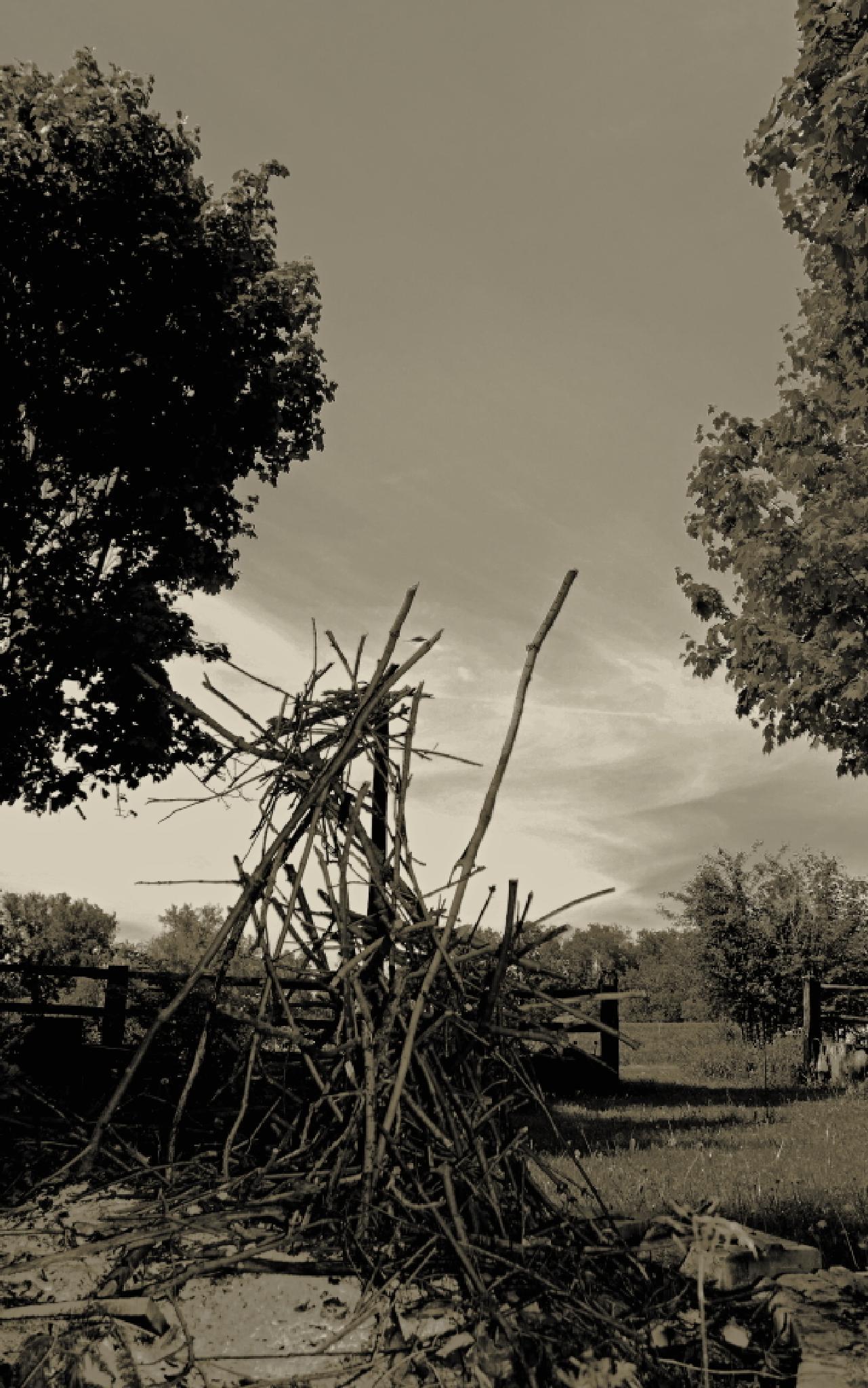 Photo in Landscape #landscape #black and white #sticks