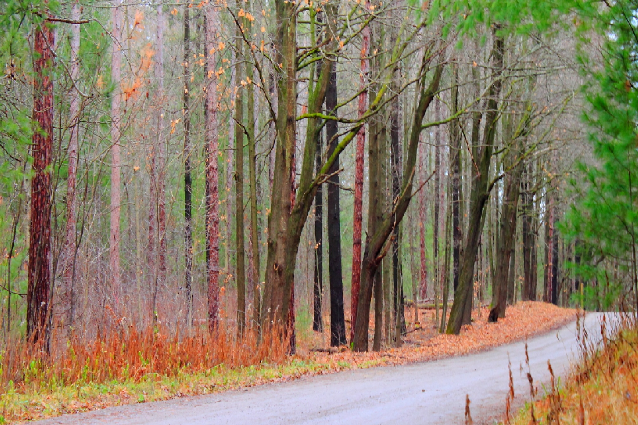 York Region Forest by JaniceArnottPhotography
