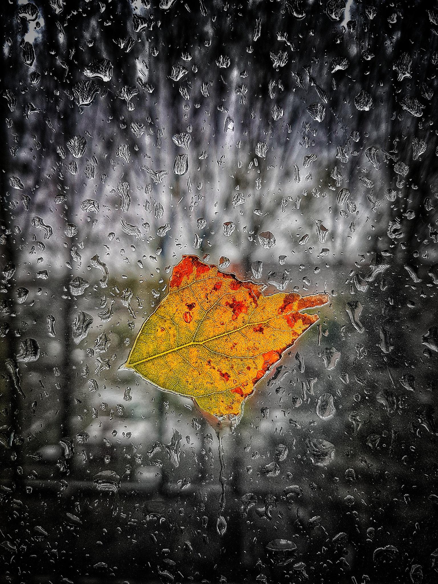 Leaf on a window  by Edi Straub