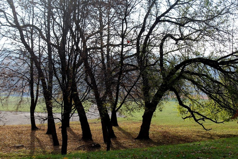 Trees without leaves by Vile