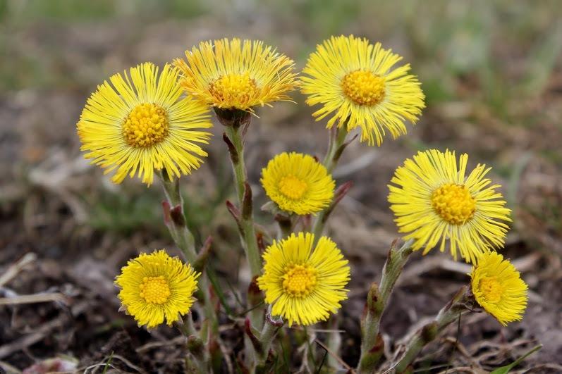 Spring flowers by Vile