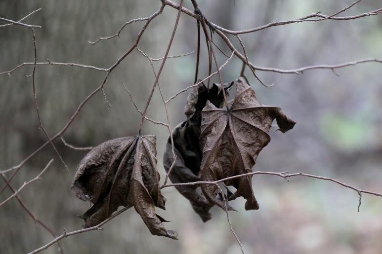 Gray leaves by Vile