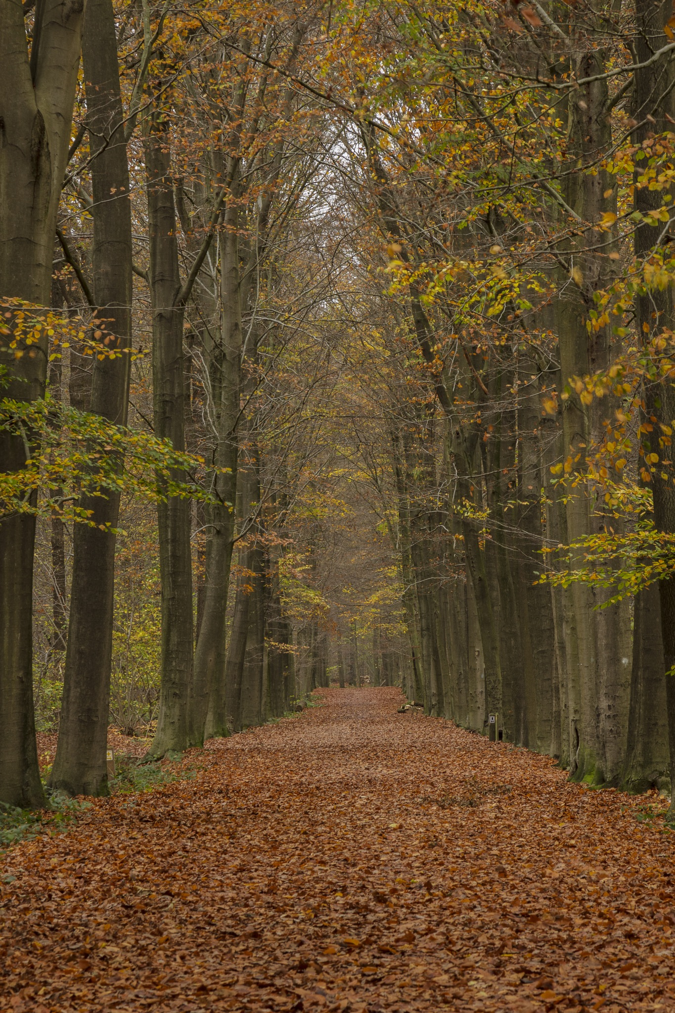 Brown carpet by WillyLangmans