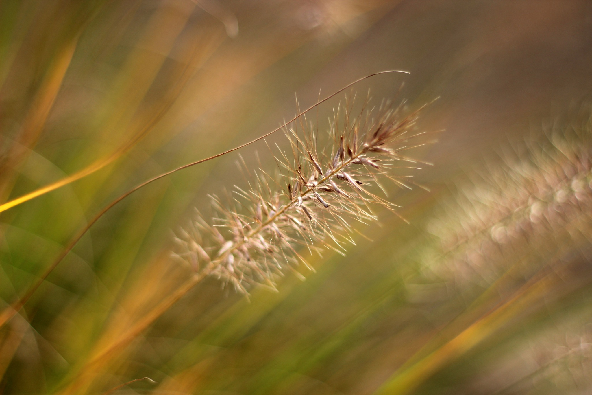 Grass by WillyLangmans