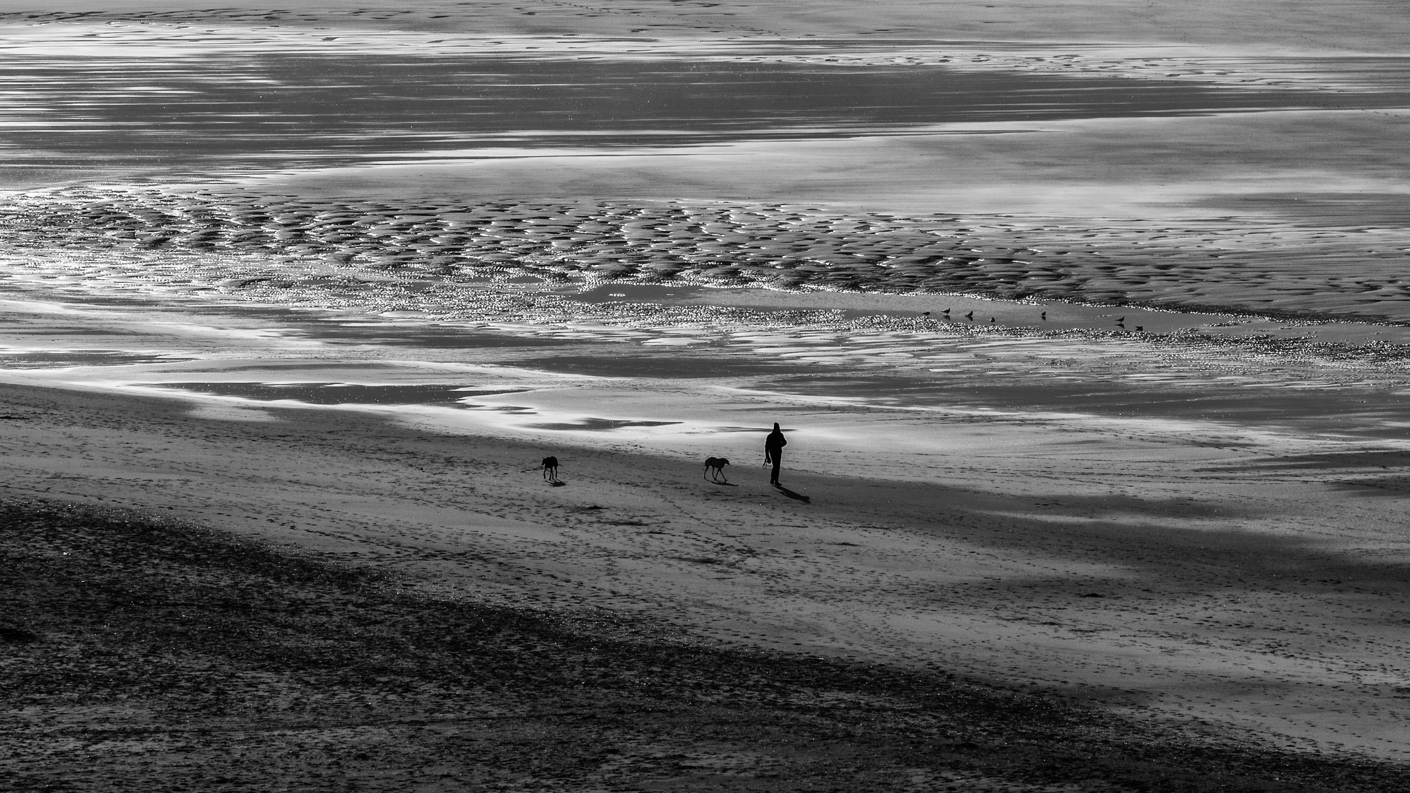 Walking the dogs by WillyLangmans