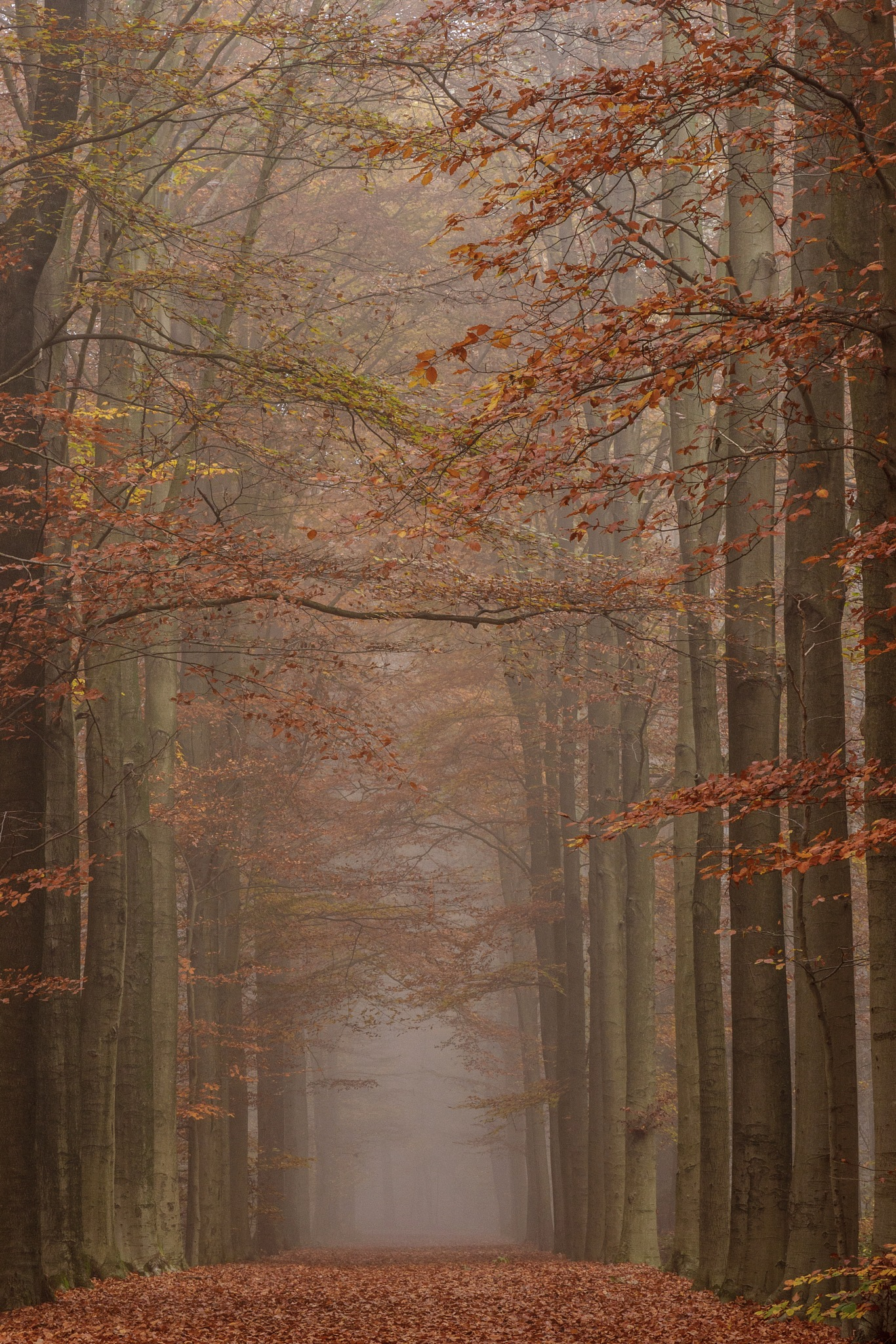 Autumn brown by WillyLangmans