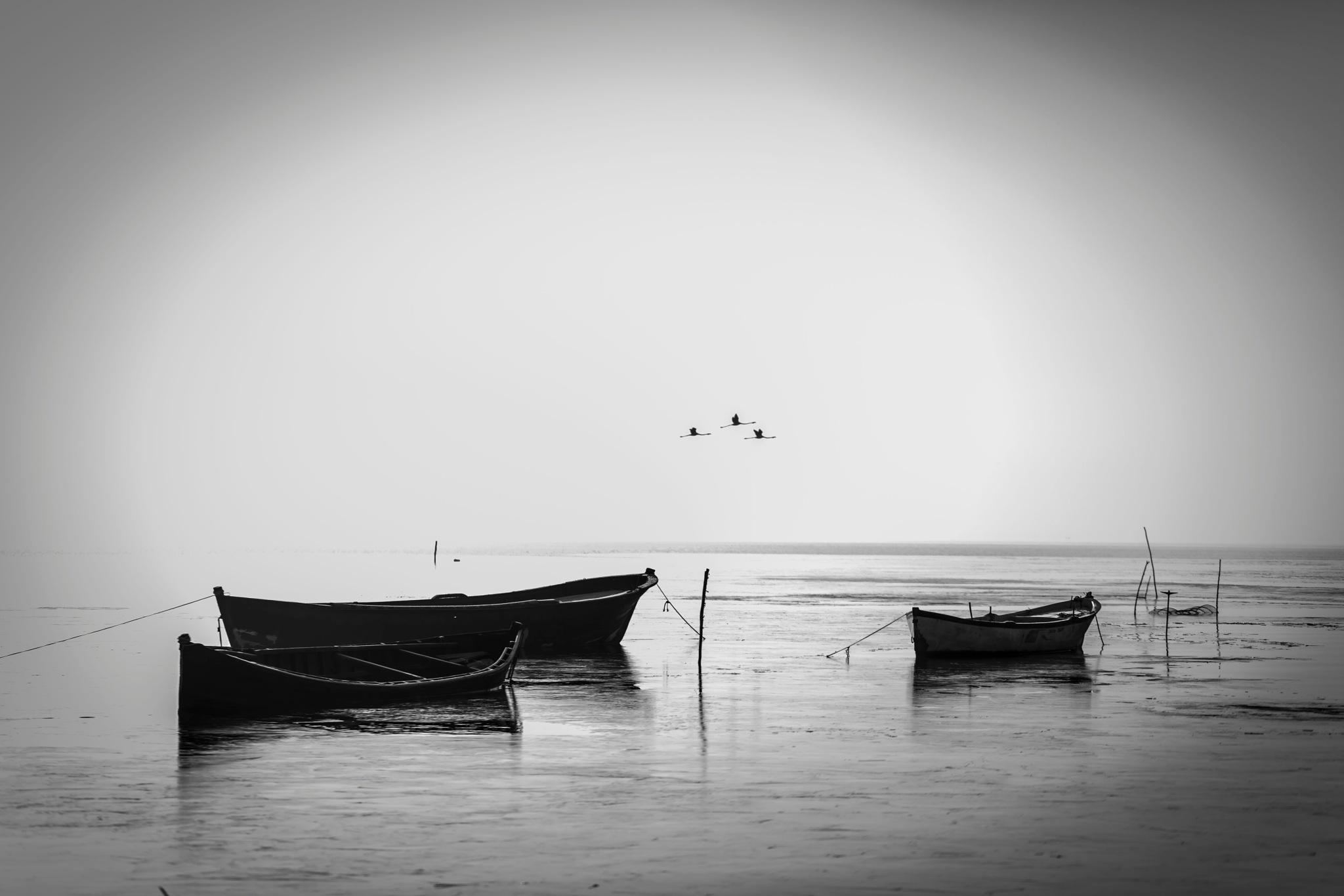 flamingos... by Serkan Aksu