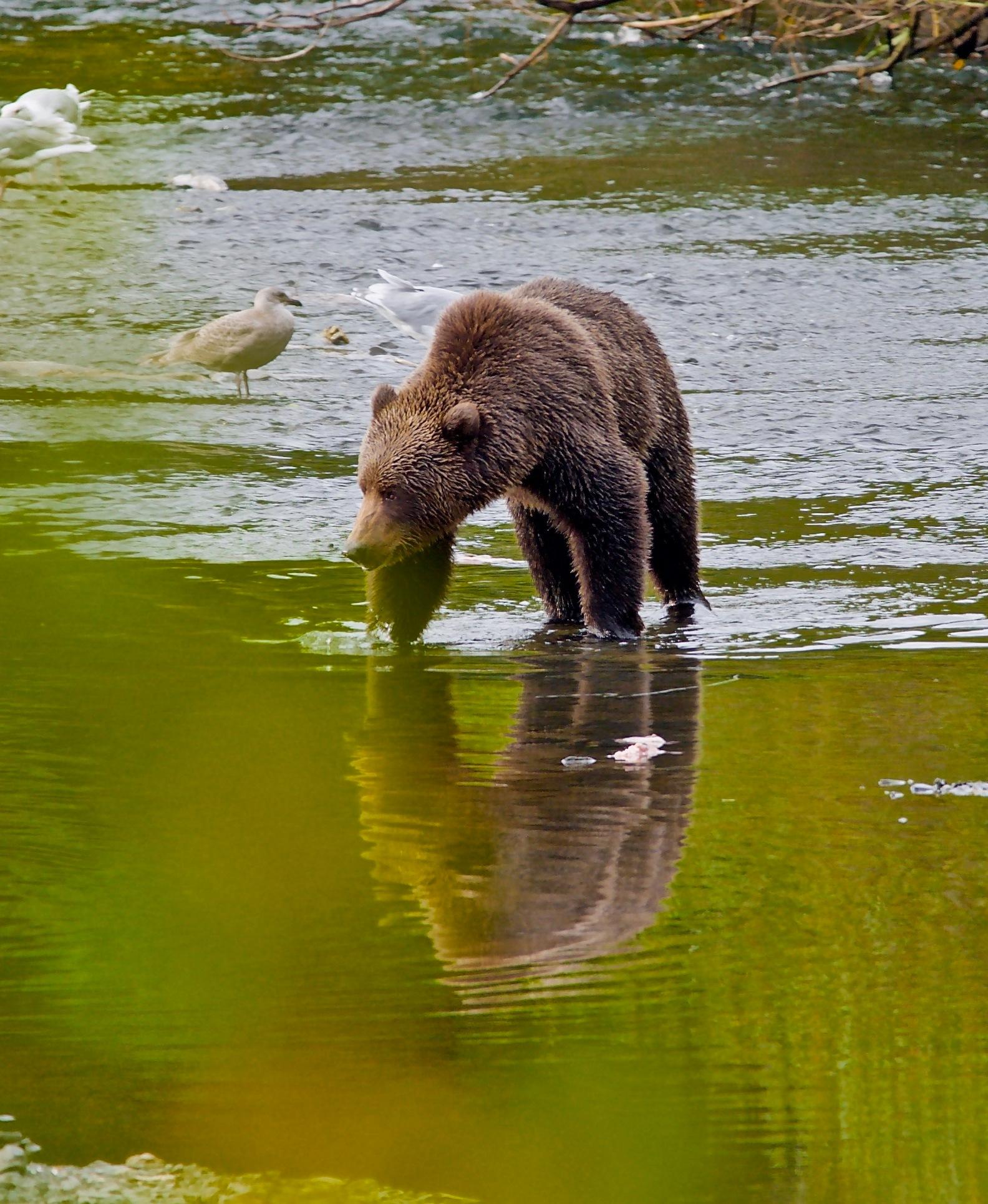 Reflections by Polar_Bear