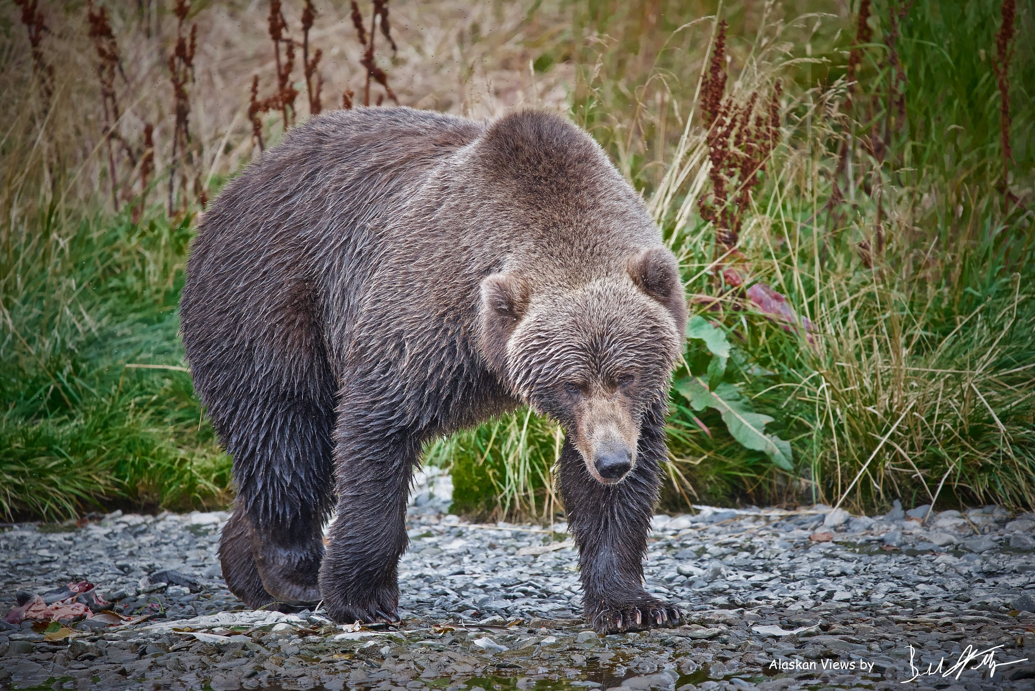 The Eye On The Target by Polar_Bear