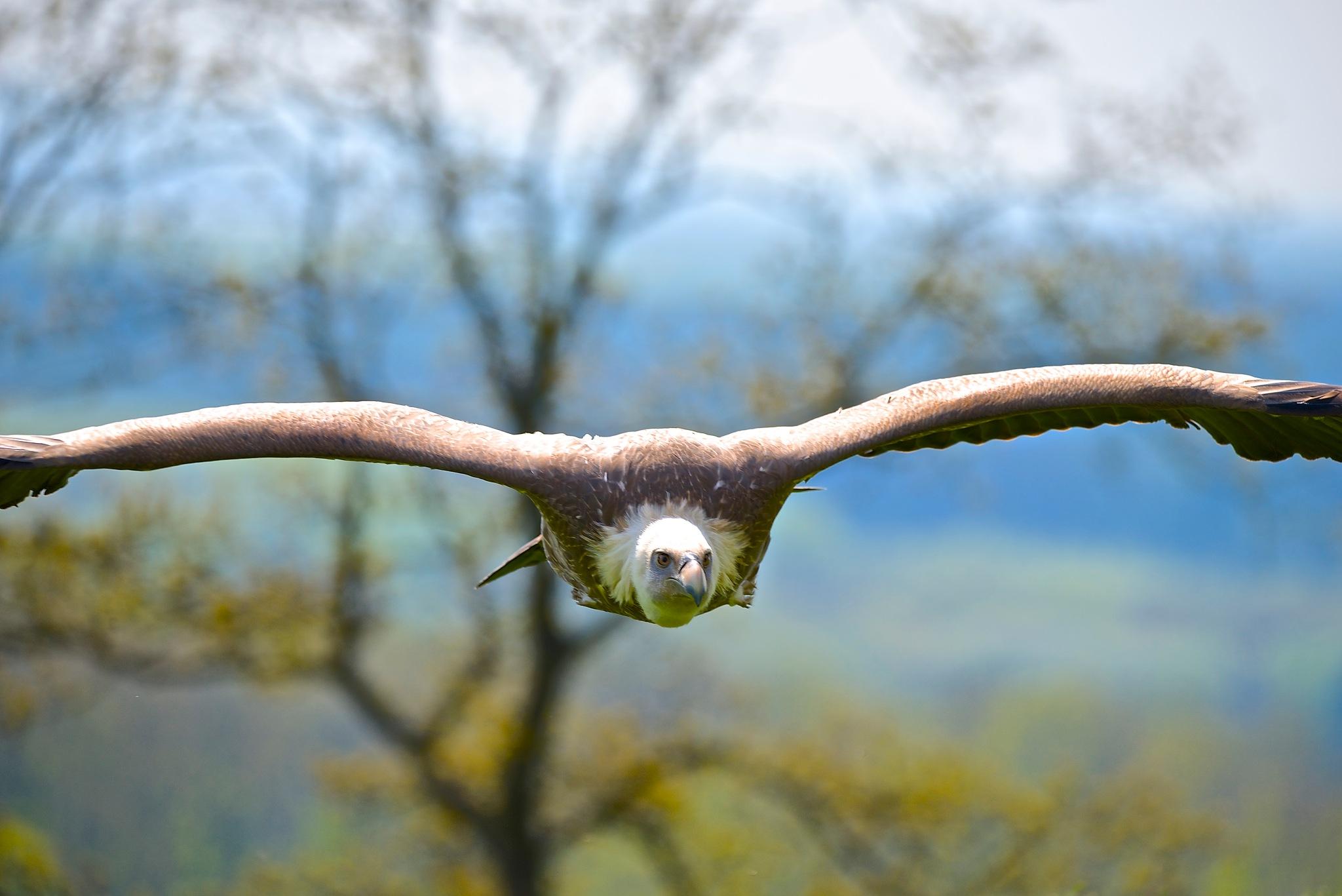 Big Bird by Polar_Bear