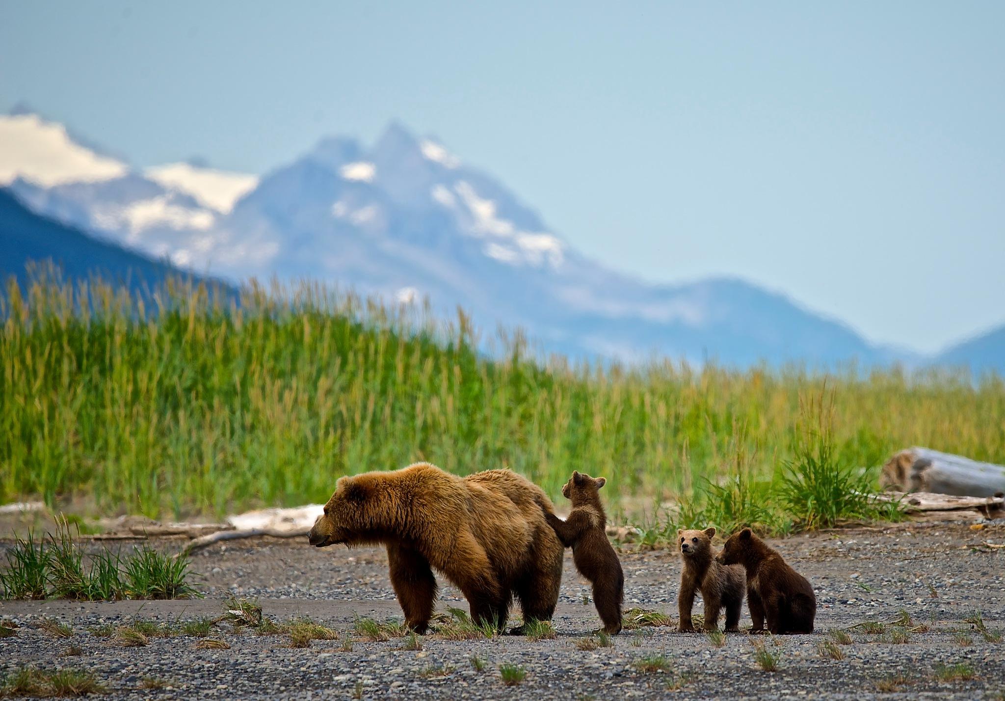 Alaska Beach Goers by Polar_Bear