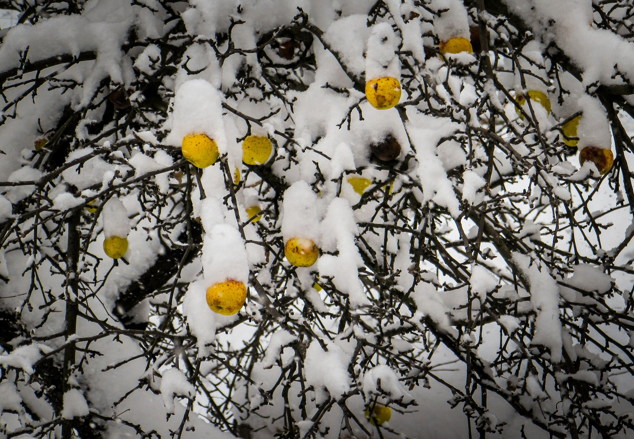 winter fruits  by Ivaylo Lazarov