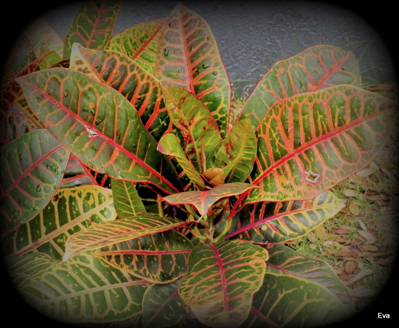 Colorful foliage by EvaKassler