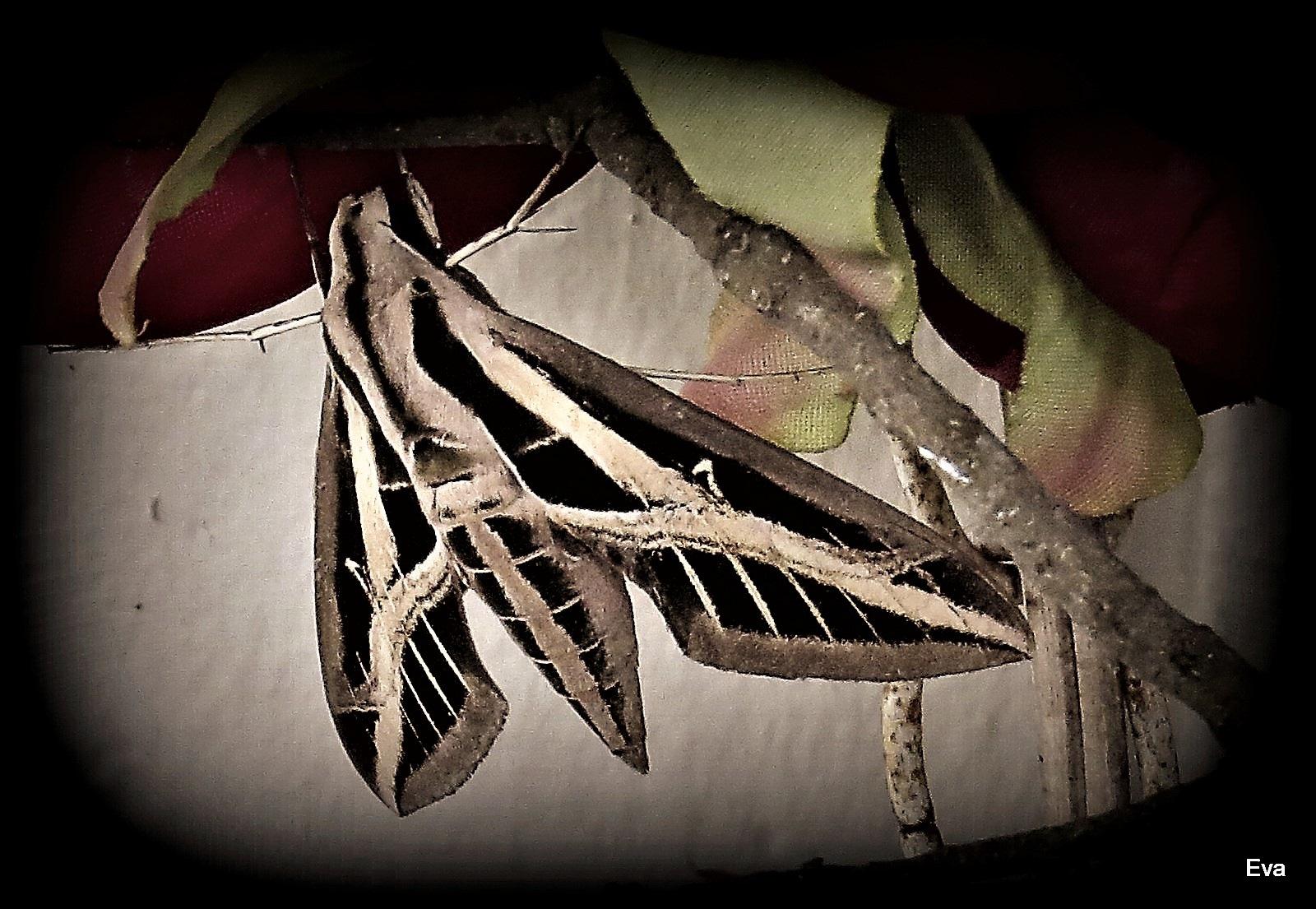 Sleeping moth by EvaKassler