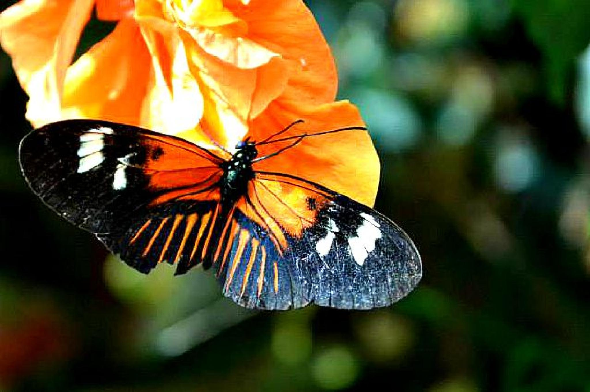 Butterfly by Sharon Patterson
