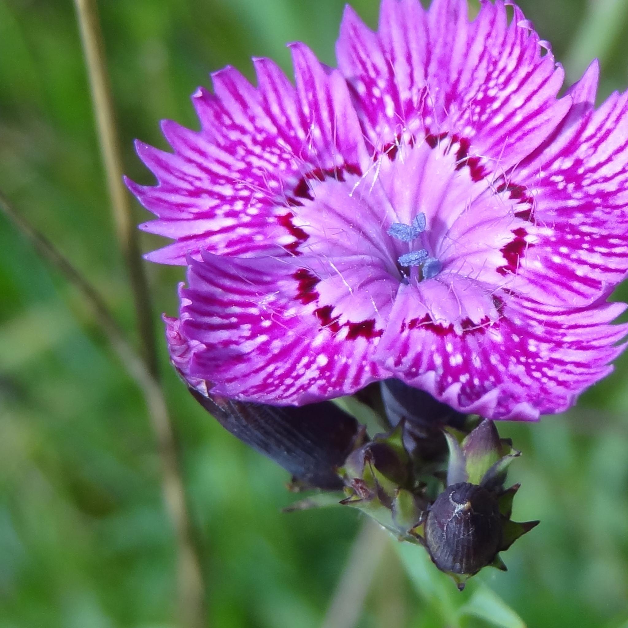 Fleur sauvage by Mina Elvé