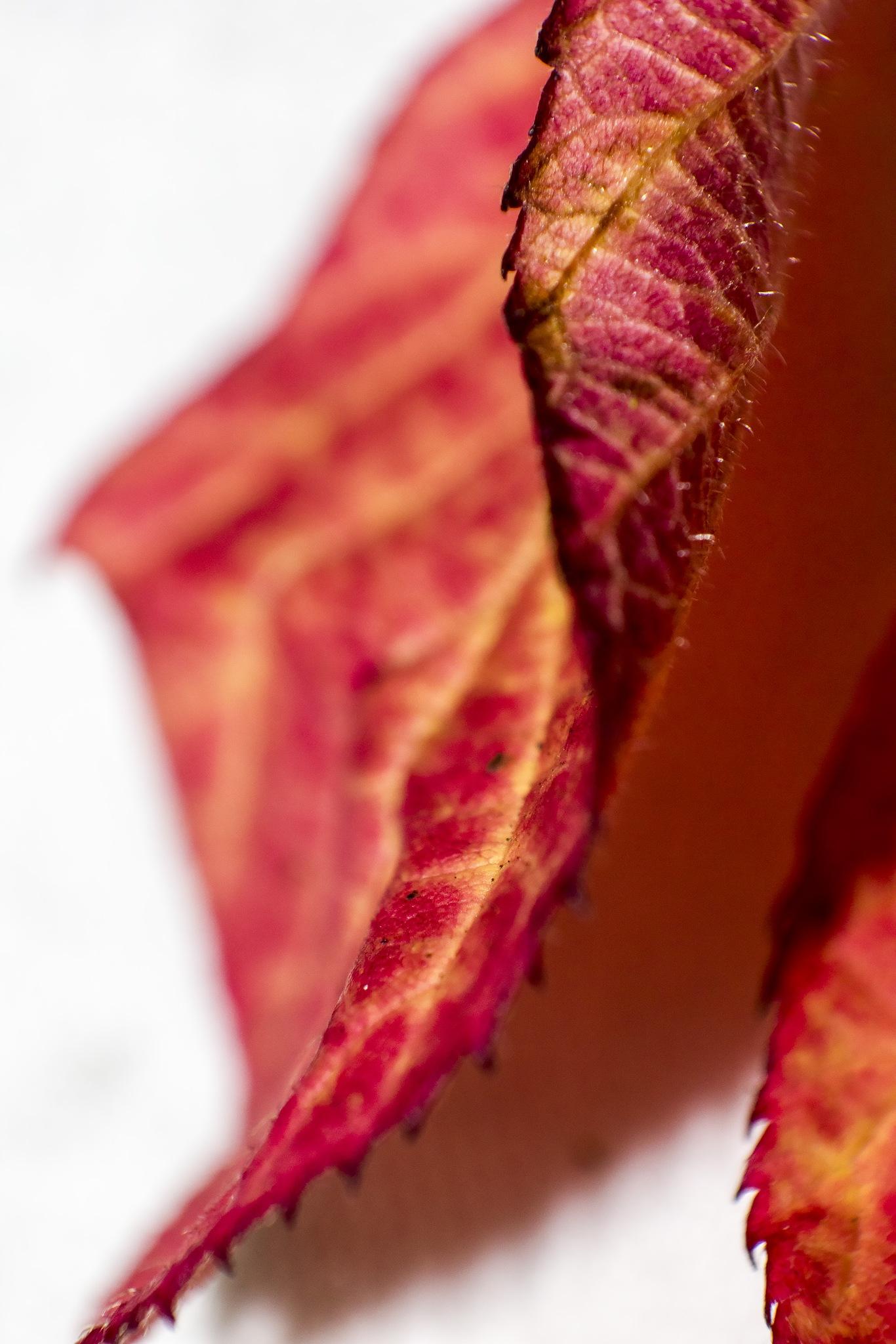 Red. Dead. Or nearly dead  by Domas Rakauskas