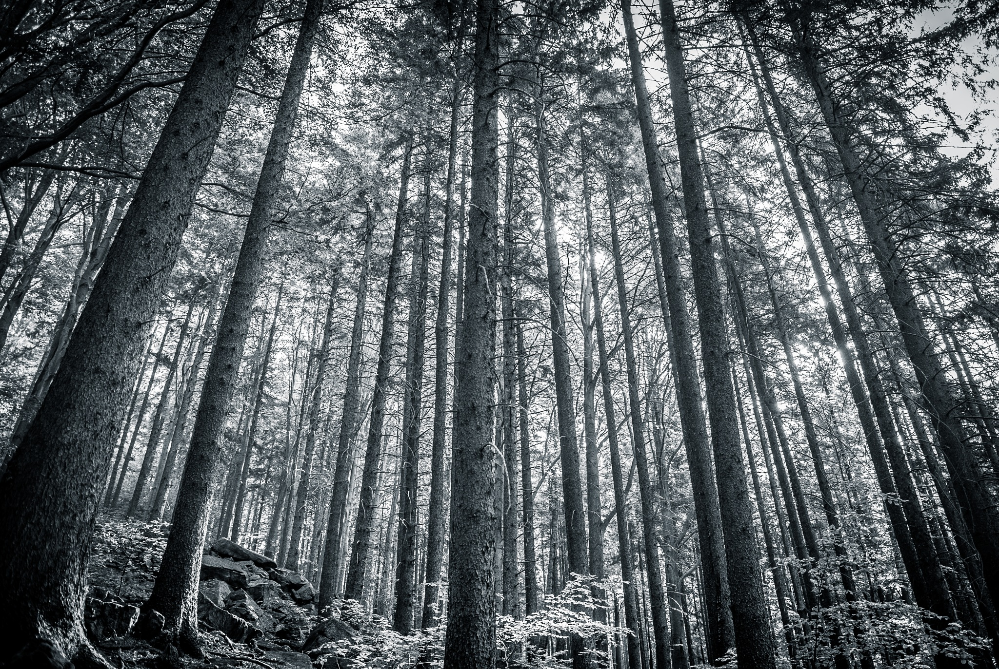 Cryptic Forest by tOmek