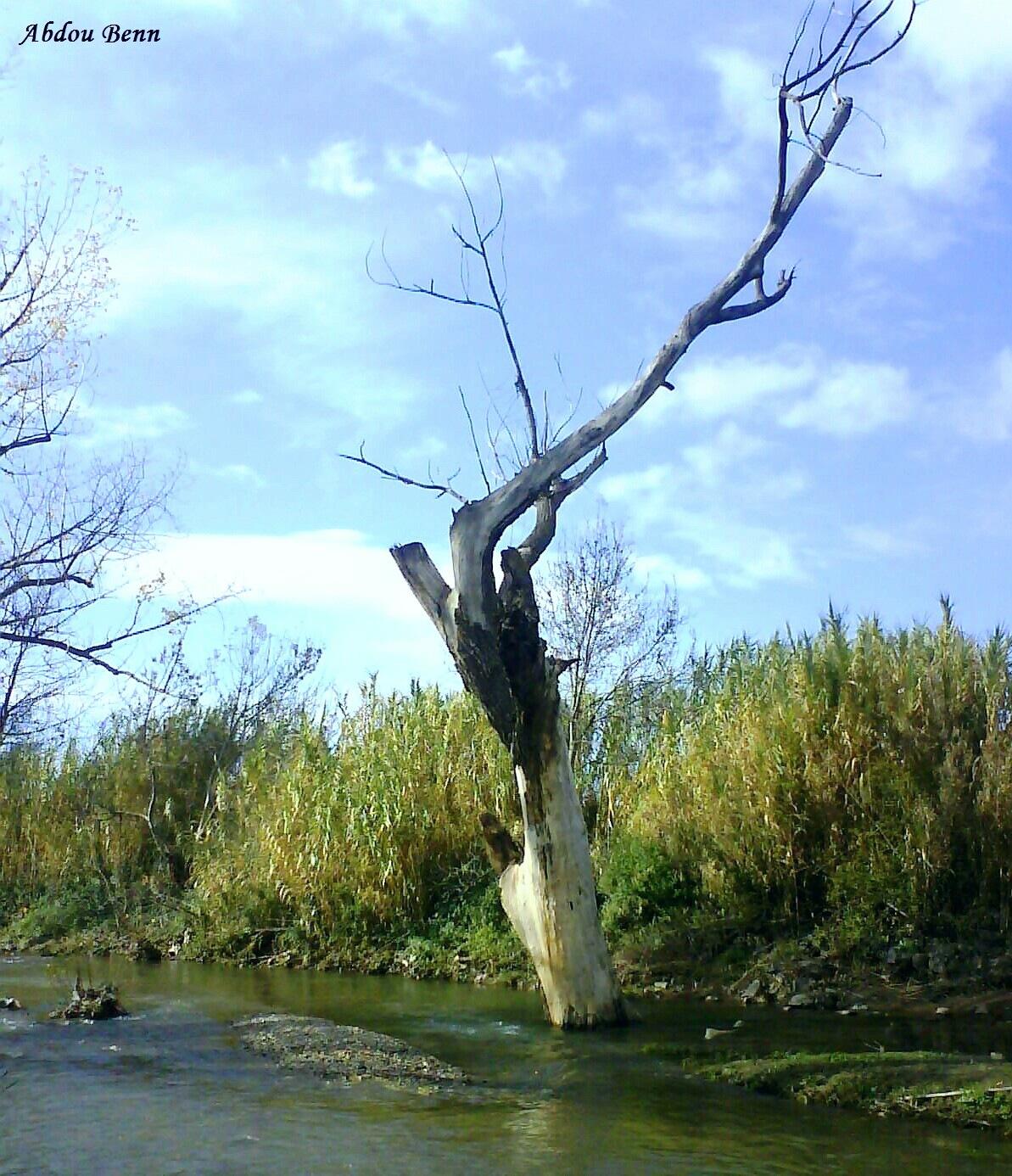 dead tree by Abdou_Benn