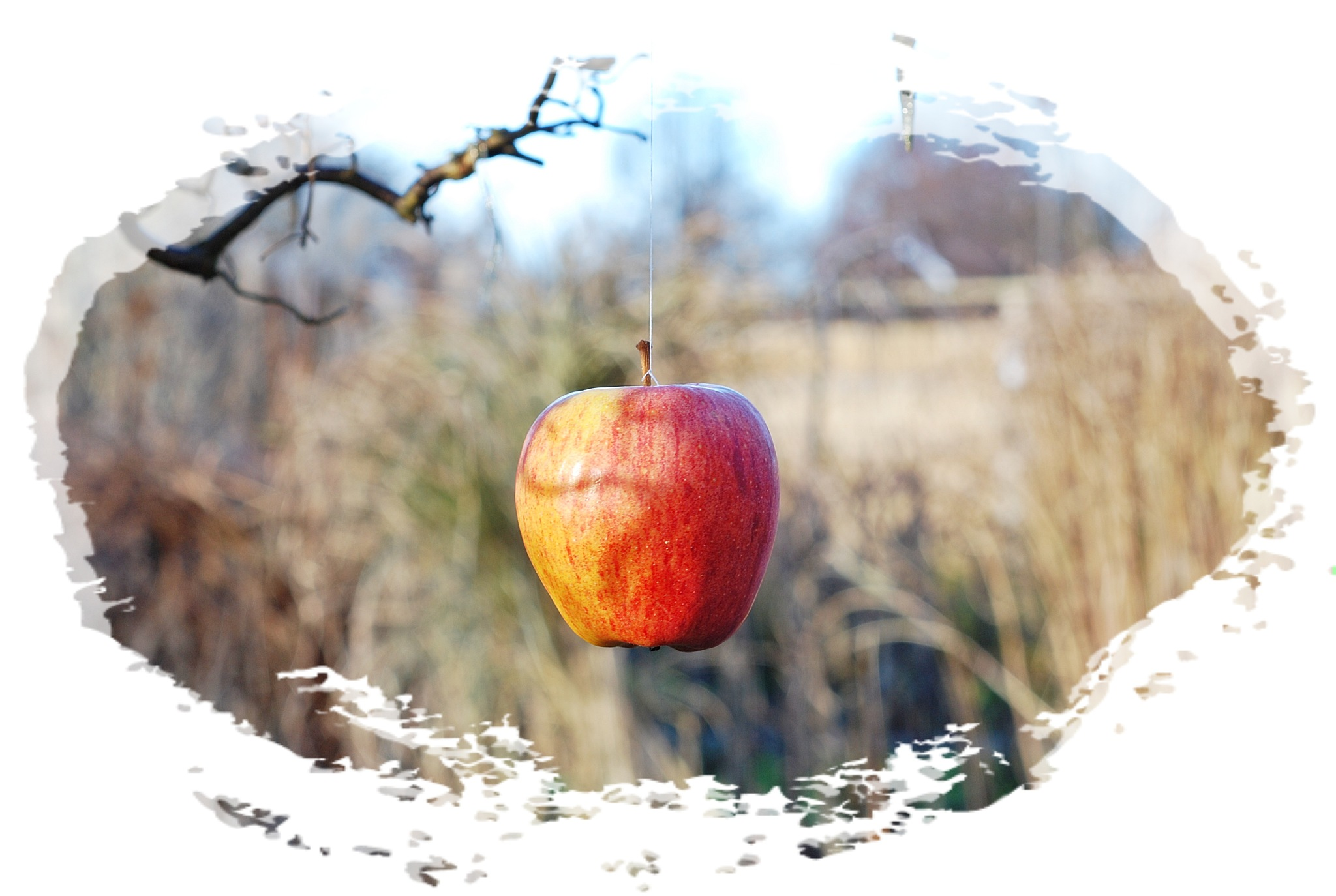vinter äpplet  by Max Cesare Parodi