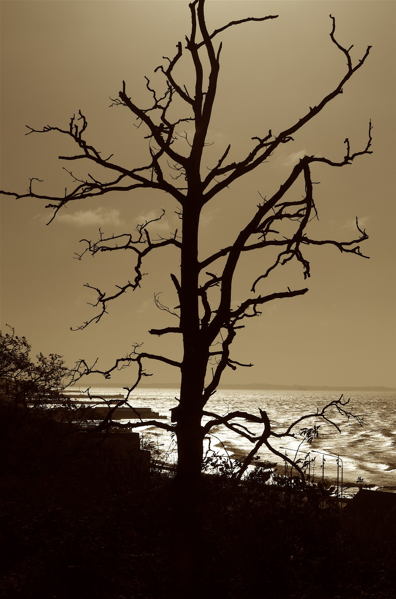 leafless tree in opposing sun by Max Cesare Parodi