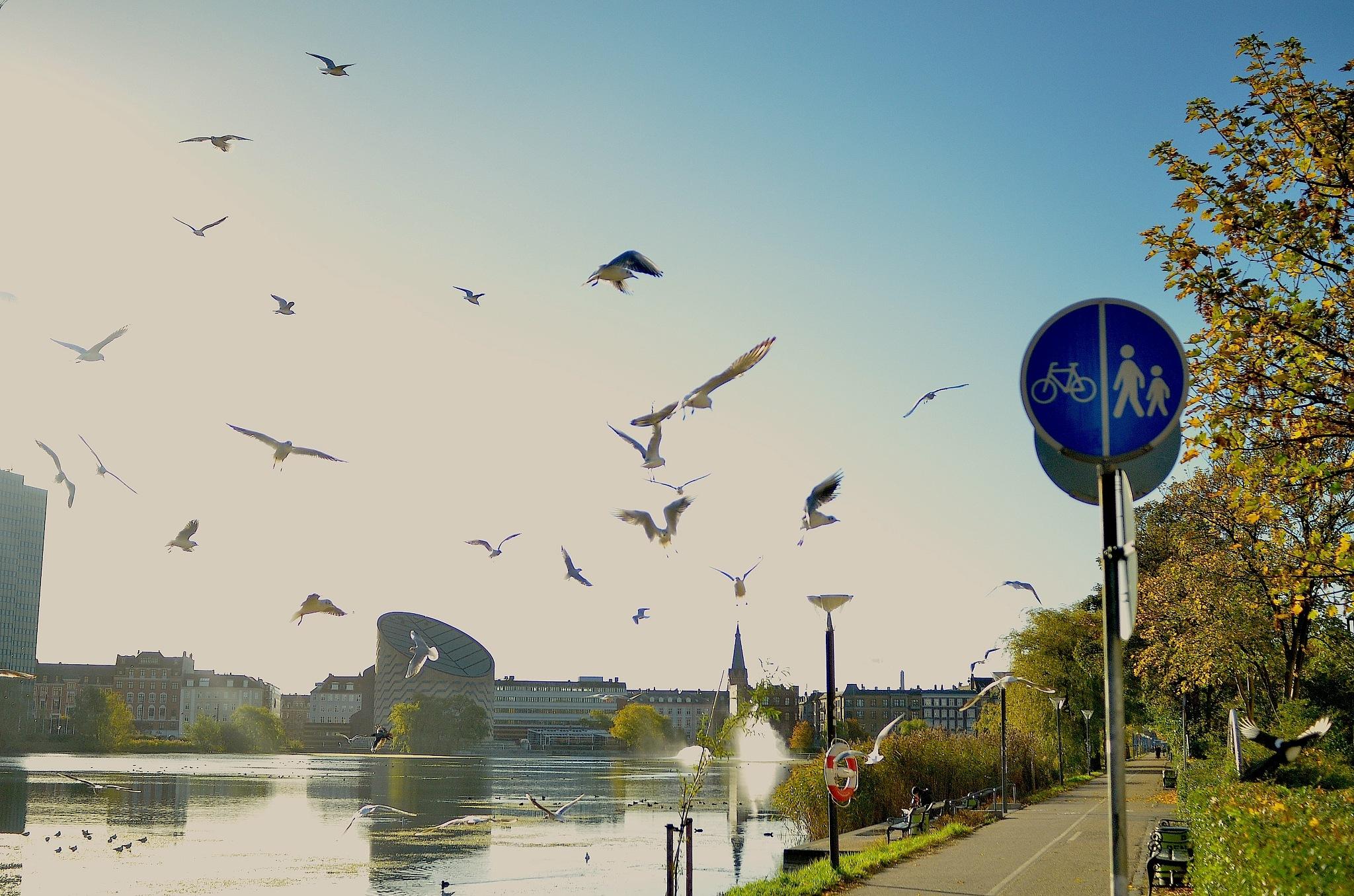 köpenhamn by Max Cesare Parodi