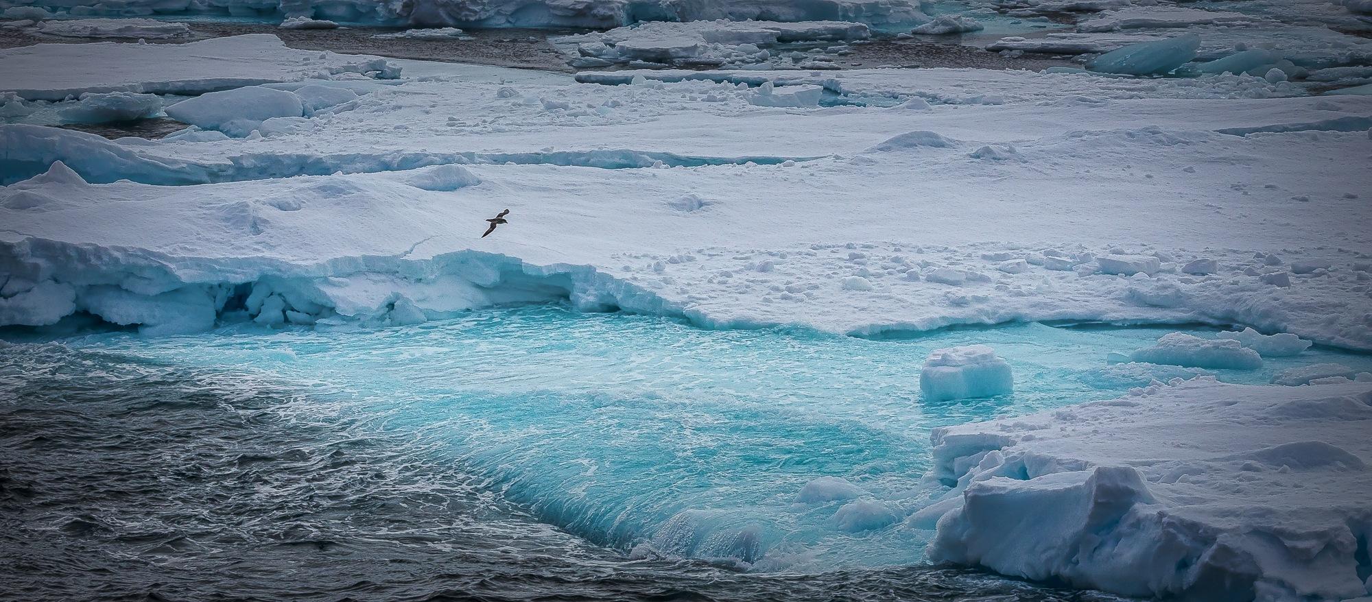 Frozen by uwe_foto