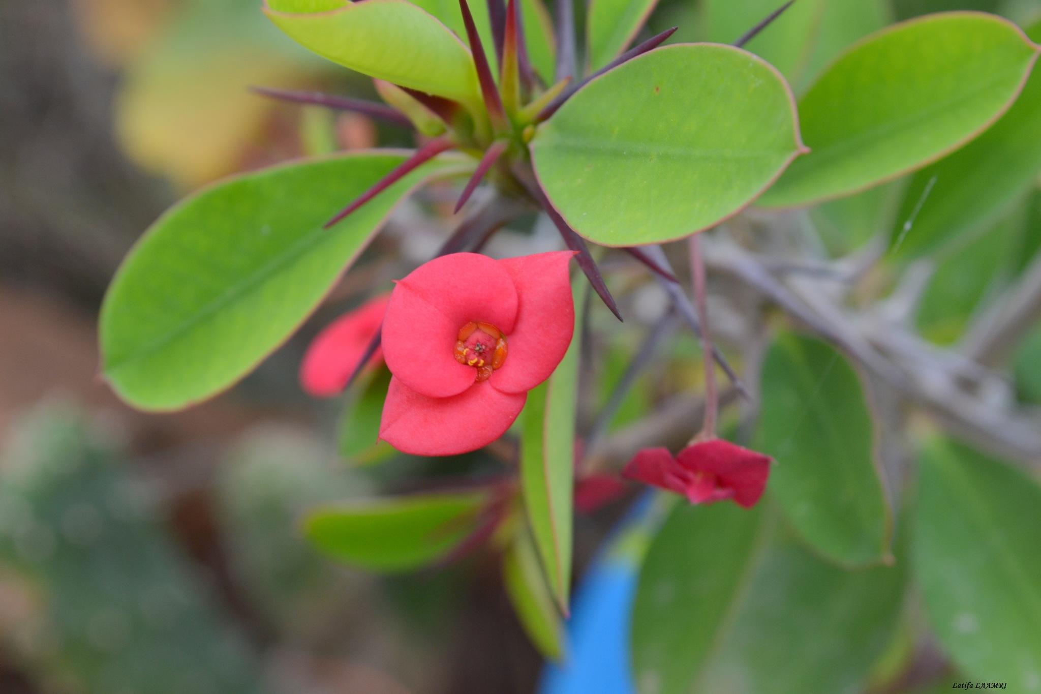 Flower again by loli1