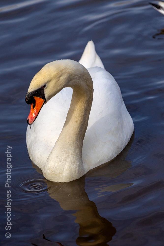 Buick swan by stephenjenkins