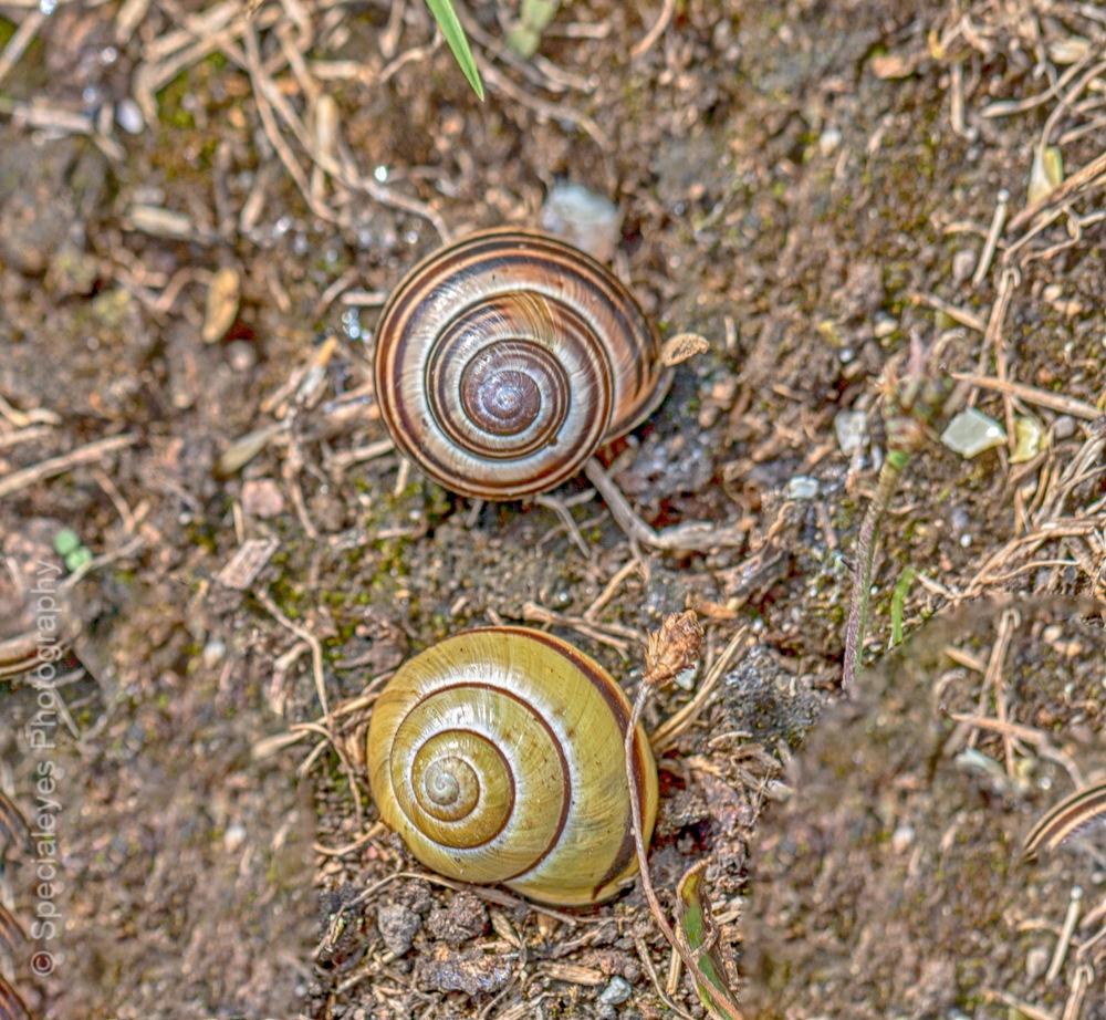 Shells by stephenjenkins