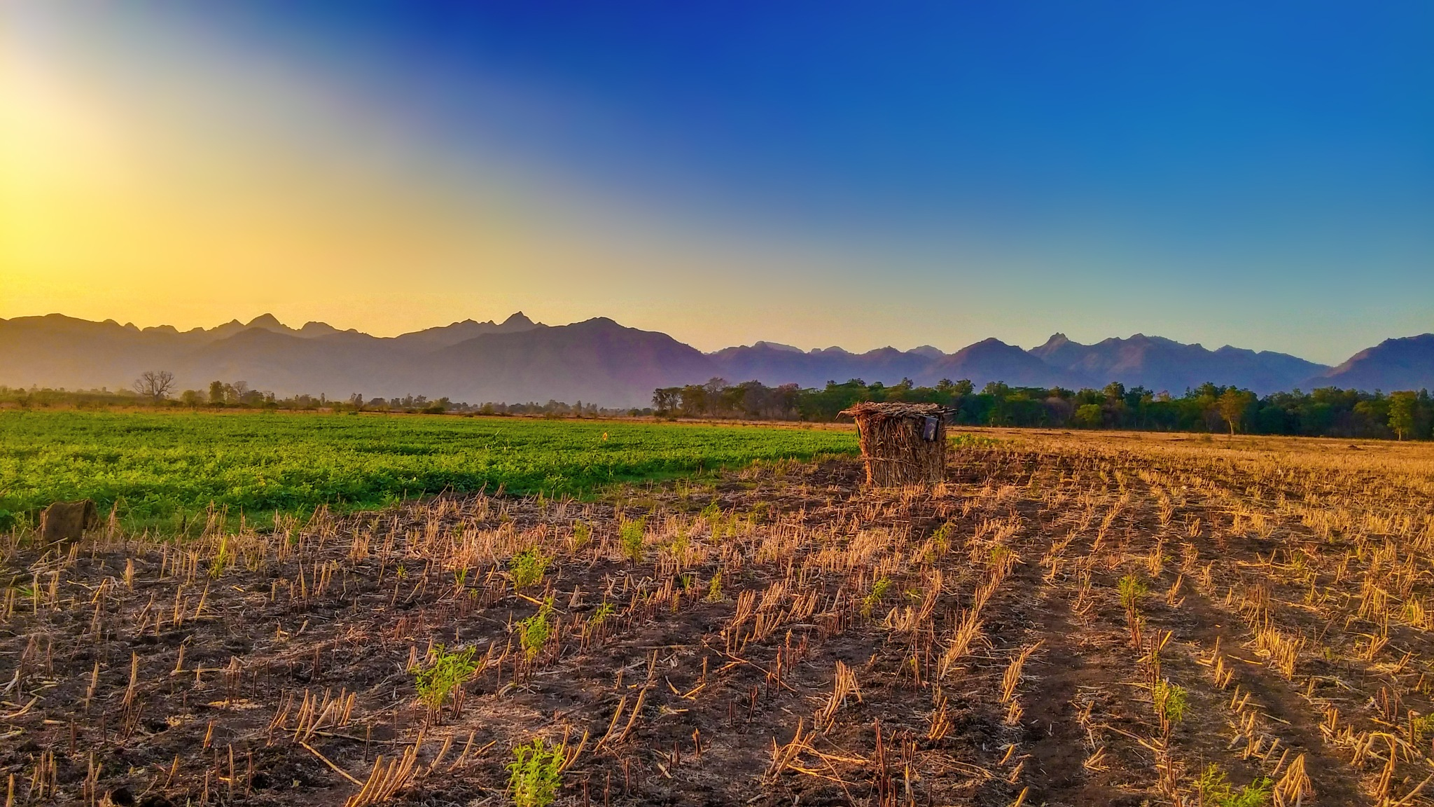 Scenic view of agricultural field at sunset by Shaikh Mubashir