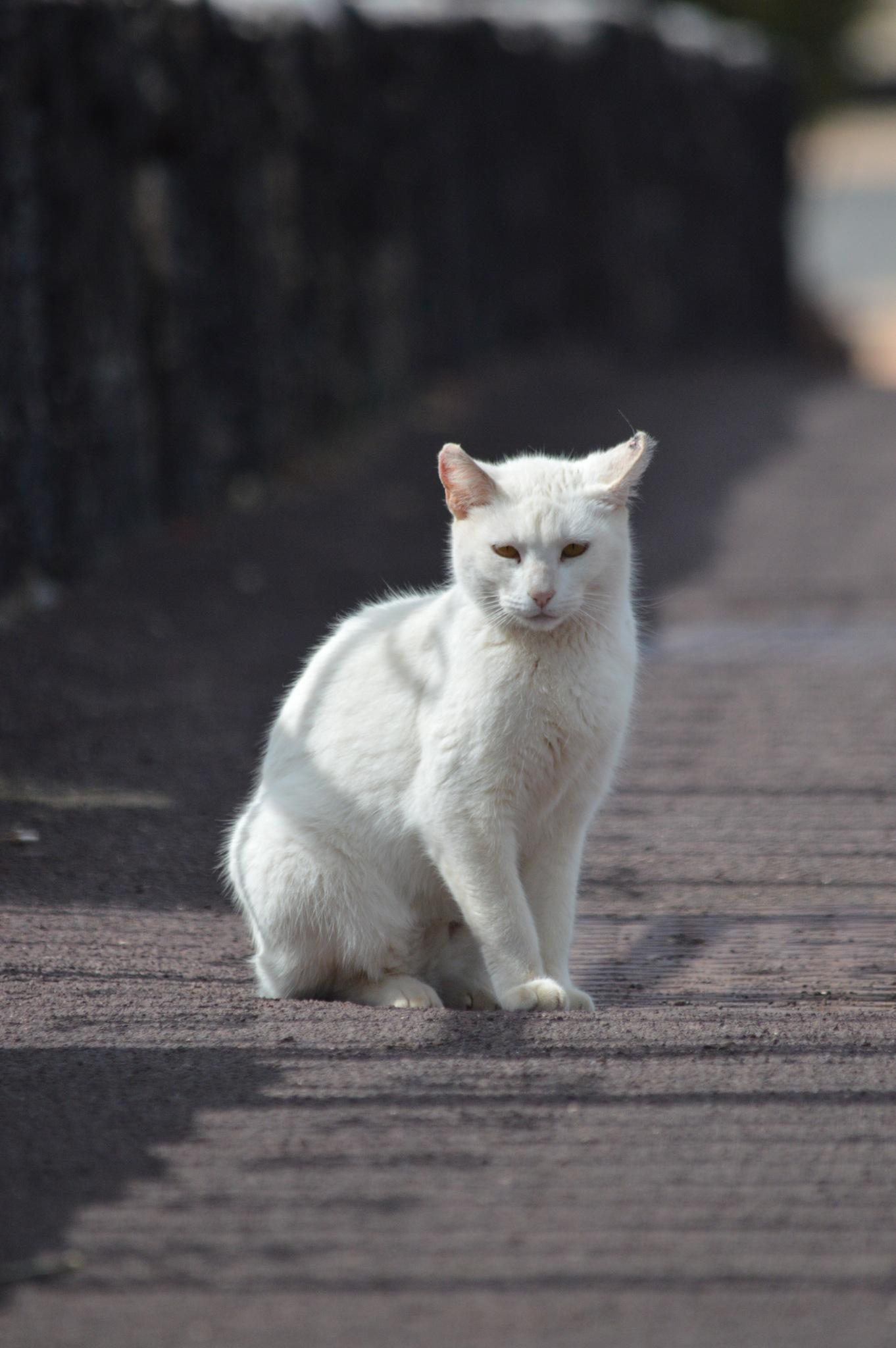 prrrrretty kitty by HollyH