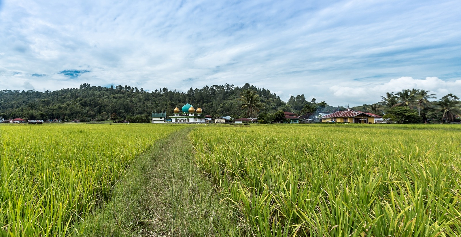 Masjid by the padi field. by Abd Rahman