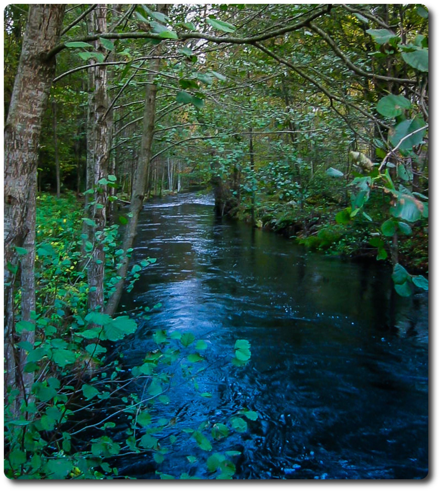 Stream in the forest by Lars Hultman