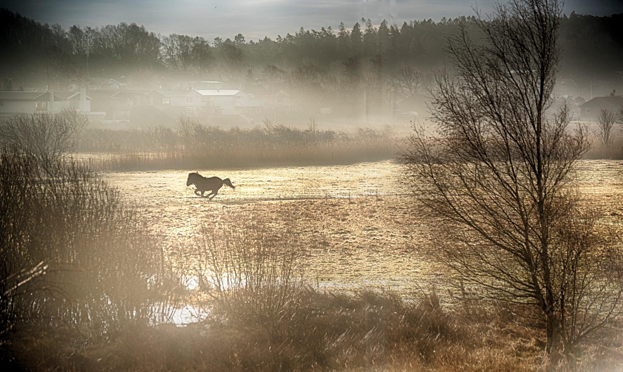 Galopp by David Sjöstrand