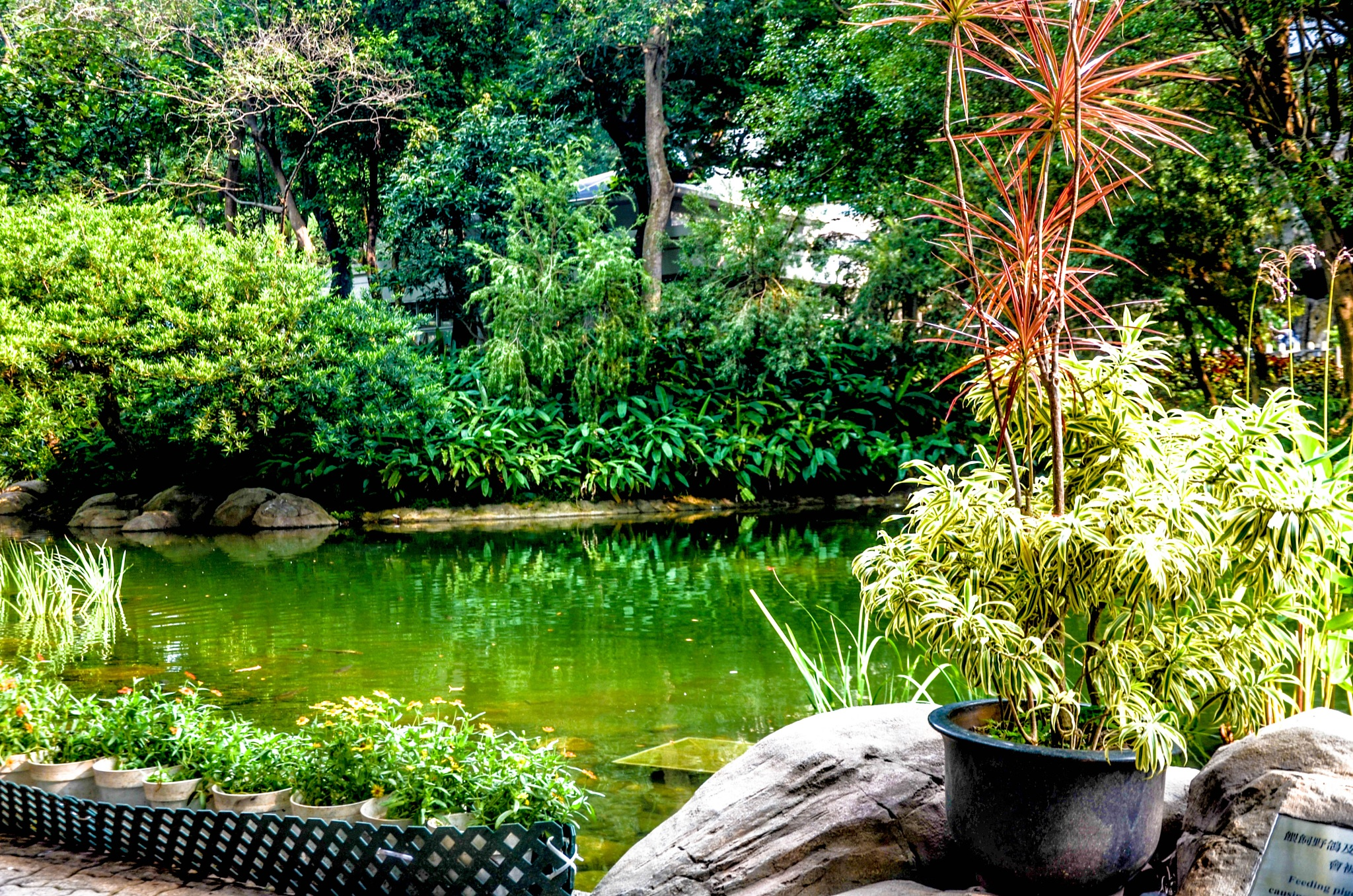Park in Concrete Jungle! by Saurav Man Sainju