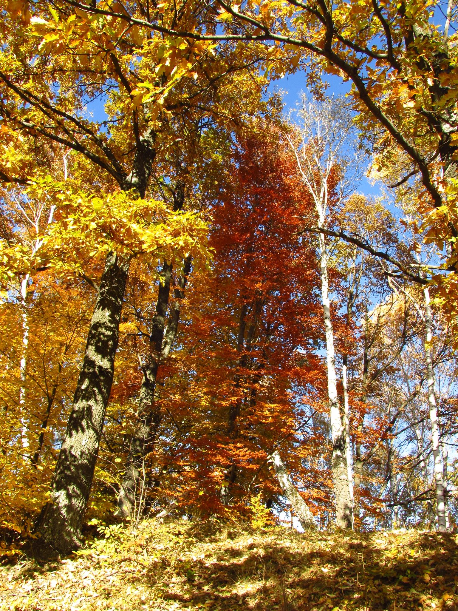 autumn by Ionela Garovat