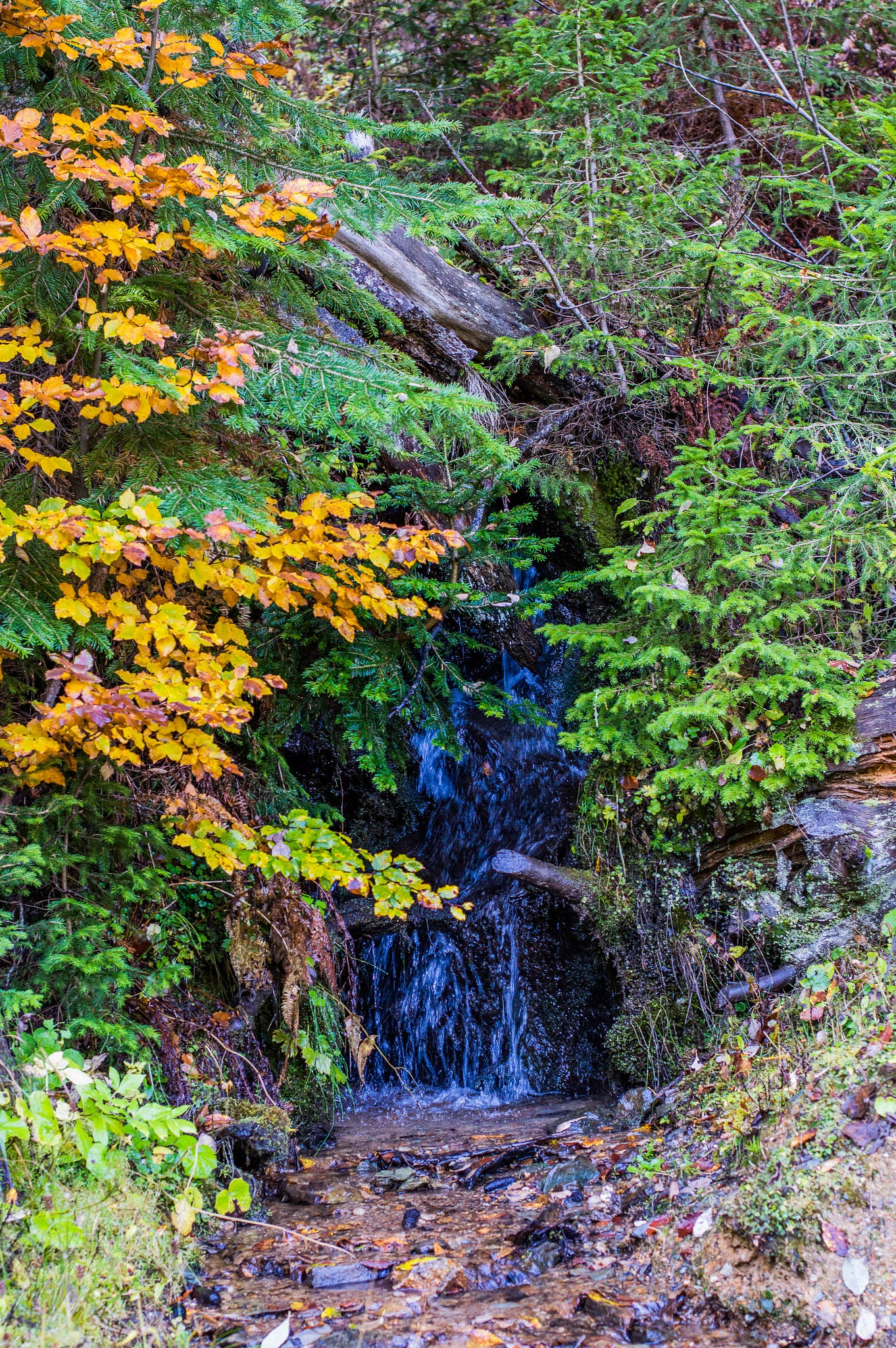 Autumn Nature by Daron