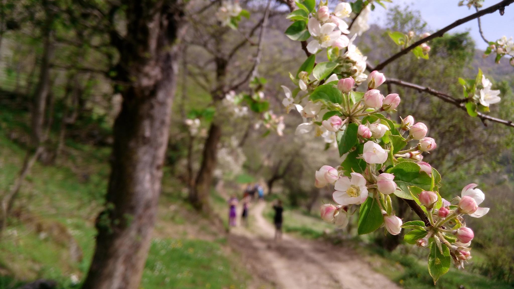 Tree Flowers by Daron