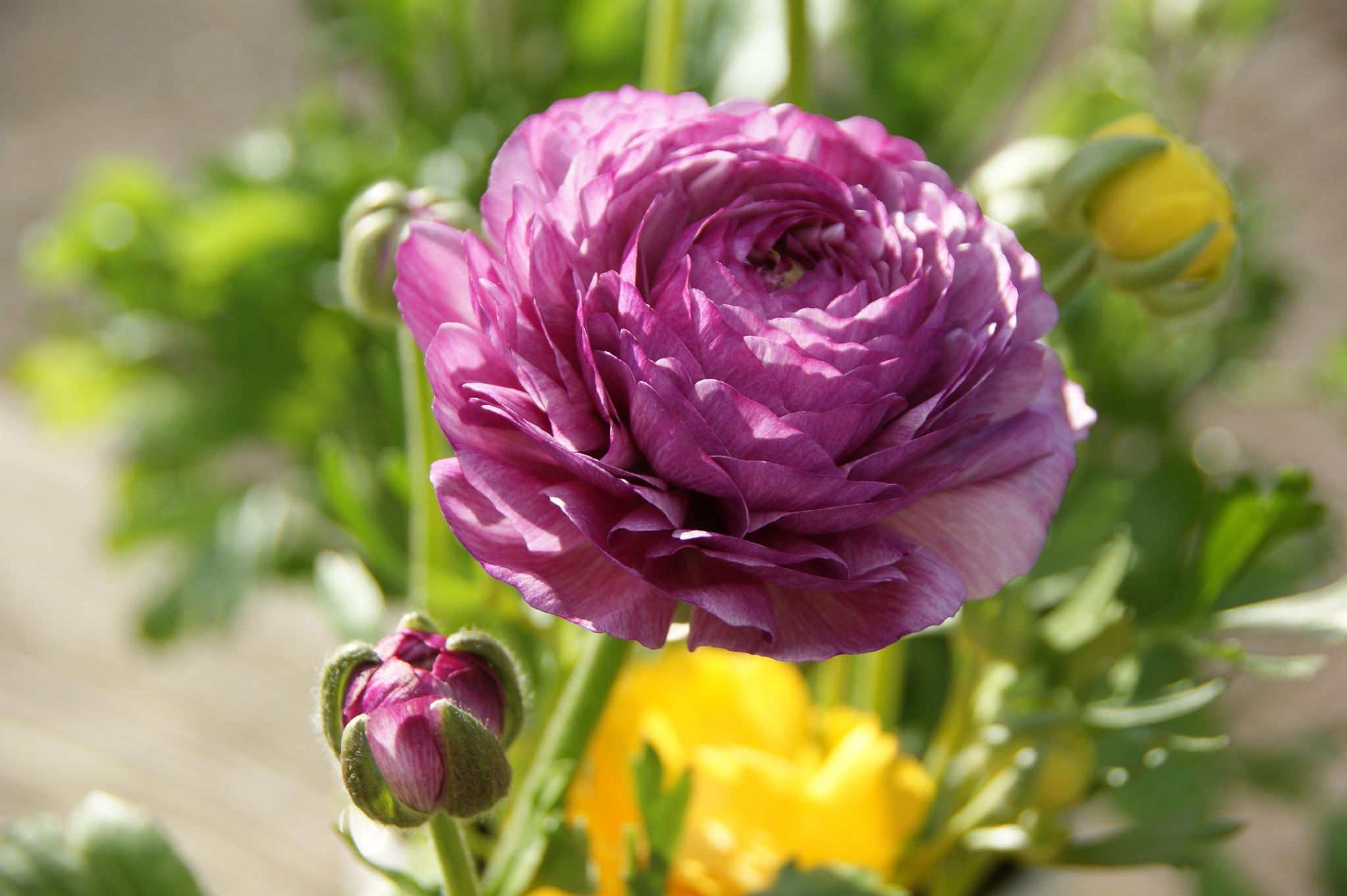 Photo in Landscape #flower