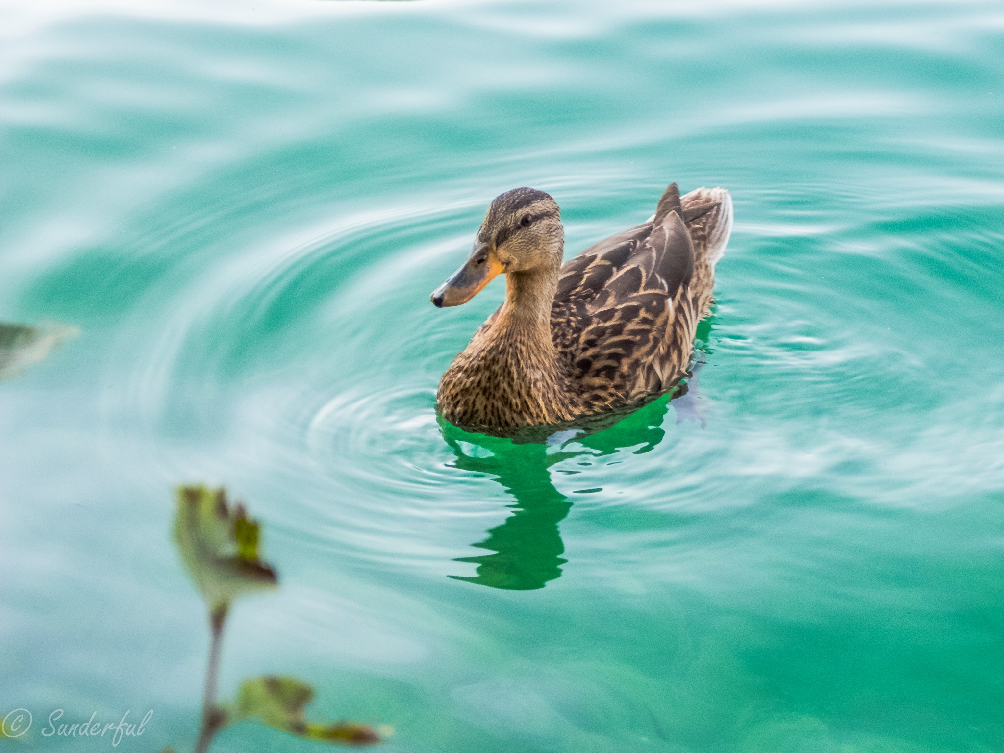 Duck by Sunderful