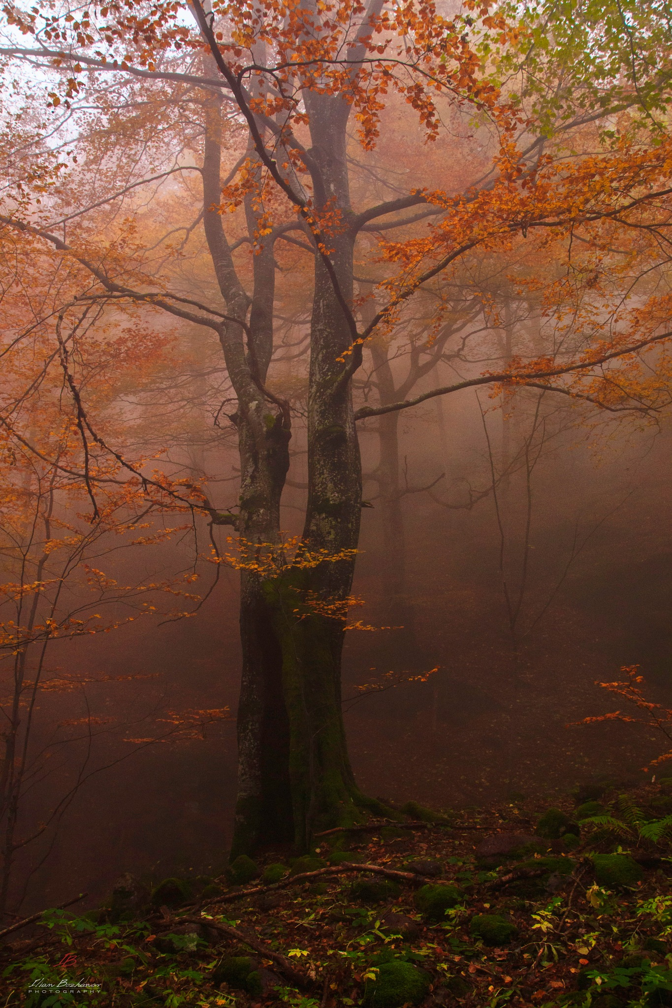 Autumn in the woods by IlianPhotography