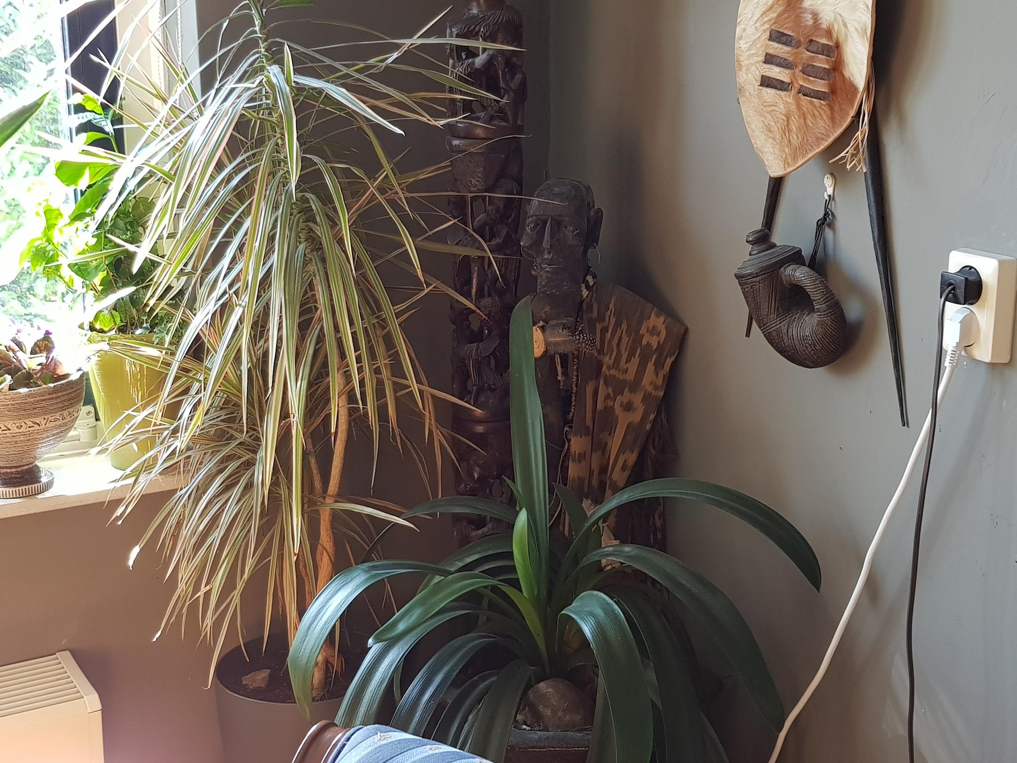 grandpa watch my plants by Justmetoo