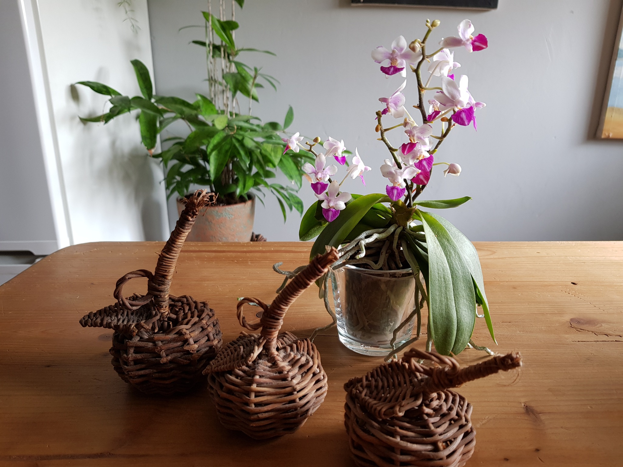 the little Orchids 1 by Justmetoo
