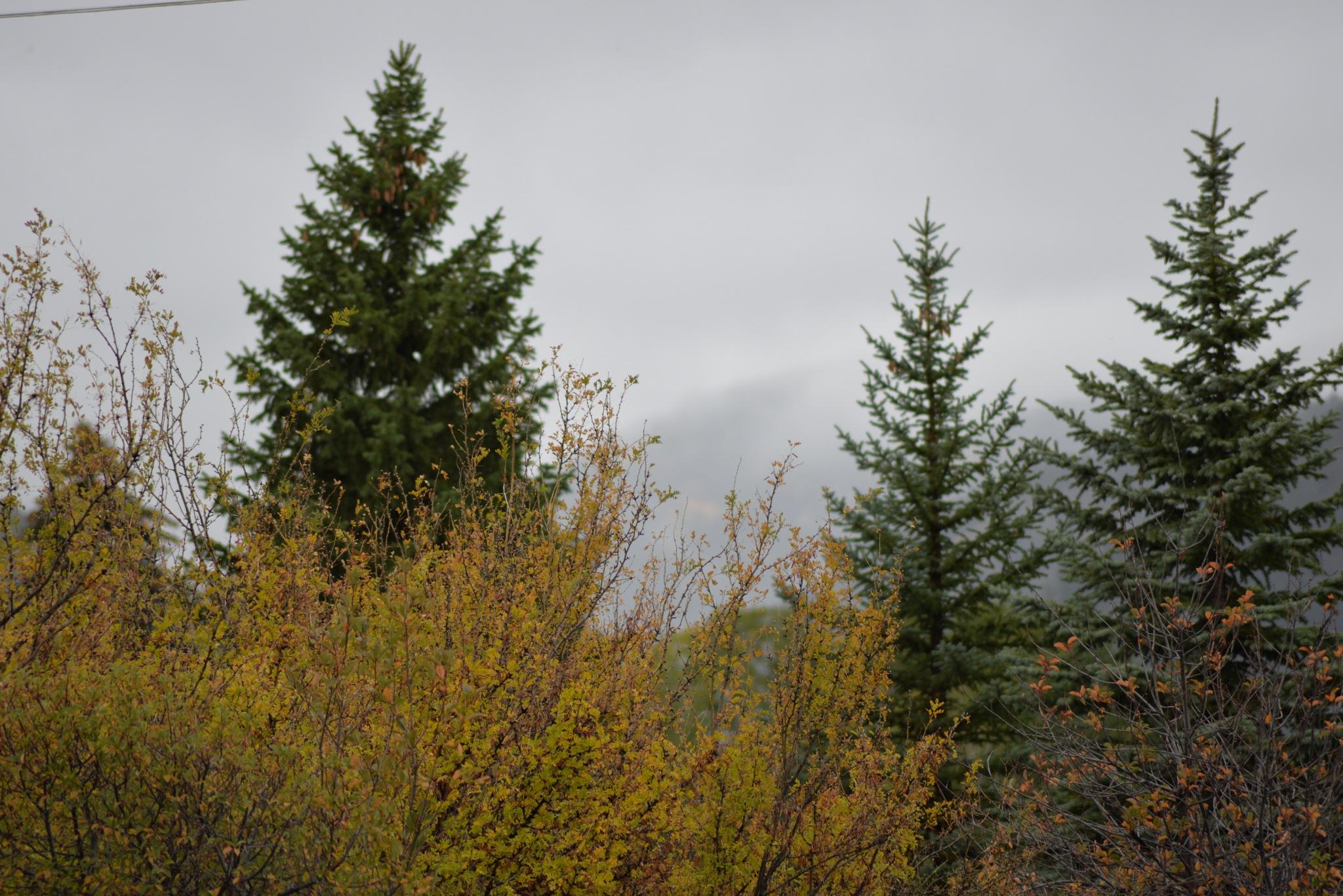 Mountain Mists by Misty Martin